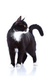 Svartvit katt. Arkivfoto