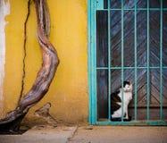 Svartvit katt bak stänger 1 arkivfoto