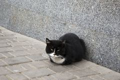 Svartvit katt för gata arkivbild