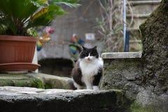 Svartvit katt i den historiska mitten Royaltyfri Foto