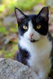 Svartvit katt i grön skog Arkivbild