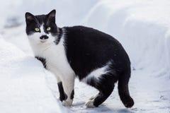 Svartvit katt i snön Royaltyfri Bild