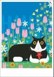 Svartvit katt i trädgård Arkivbilder