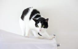 Svartvit katt i vitt rum Arkivfoto