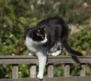 Svartvit katt med bakgrunden av grönska, solig dag fotografering för bildbyråer