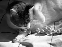 Svartvit katt med pärlor Fotografering för Bildbyråer