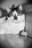 Svartvit katt på golvet bredvid trappa Royaltyfria Foton