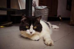 Svartvit katt som kopplar av på jordningen Fotografering för Bildbyråer