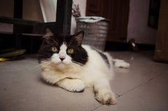 Svartvit katt som kopplar av på jordningen Royaltyfria Foton