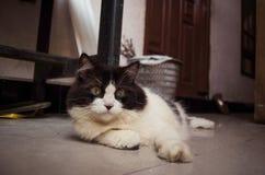 Svartvit katt som kopplar av på jordningen Royaltyfri Fotografi