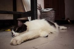 Svartvit katt som kopplar av på jordningen Royaltyfri Bild