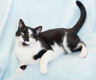 Svartvit katt som lägger på Royaltyfri Foto
