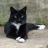 Svartvit katt som lägger på trottoaren Royaltyfria Bilder