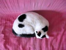 Svartvit katt som sover från överkant Royaltyfria Bilder