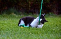 Svartvit katt som spelar i trädgården royaltyfria foton