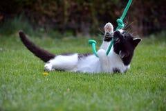 Svartvit katt som spelar i trädgården Fotografering för Bildbyråer