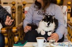 Svartvit katt som vilar på en ung flickas varv i ett kafé arkivbild