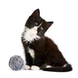 Svartvit kattunge med en woolen boll Arkivbilder