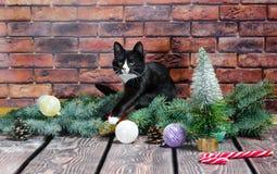 Svartvit kattunge på bakgrunden av en tegelstenvägg och en Chr arkivbild