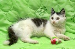 Svartvit kattunge på en gräsplan Fotografering för Bildbyråer