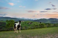 Svartvit kulör häst på beta med en underbar sikt uppifrån av St Michael f.m. Bruckbach royaltyfri foto