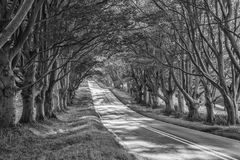 Svartvit landskapbild av vägen som leder till och med höst F Arkivbild