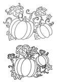 Svartvit linje teckningar av pumpor Royaltyfria Bilder