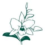 Svartvit orkidéillustration Arkivbild