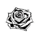 Svartvit ros tecknad hand Arkivbilder