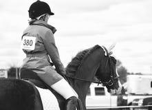 Svartvit showhäst med ryttaren royaltyfri bild