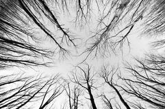 Svartvit skog royaltyfria foton
