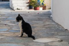 Svartvit smutsig kattunge i mitt av gatan royaltyfri foto