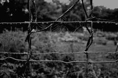 Svartvit spindelrengöringsduk och morgondaggdroppar Royaltyfri Fotografi