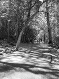 Svartvit stående av banan i Yosemite royaltyfri bild