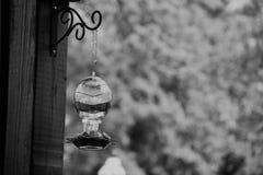 Svartvit stående för surrfågelförlagematare Arkivbilder