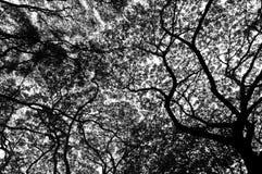 Svartvit Tree Royaltyfri Fotografi