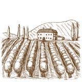 Svartvit utdragen slaglängd för italienska vingårdar ocks? vektor f?r coreldrawillustration vektor illustrationer