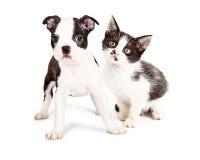 Svartvit valp och Kitten Together Royaltyfri Foto