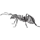 Svartvit Zentagle myra Arkivfoto