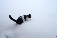 Svartvita Cat Encounters Snow Arkivbilder