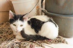 Svartvita Cat On Mop Wool arkivbild