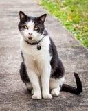 Svartvita Cat Sitting och benägenhet från sidan på trottoaren Royaltyfri Bild