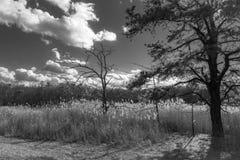 Svartvita Cheesequake fotografering för bildbyråer