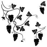 Svartvita druvor - uppsättning av få dekorativa beståndsdelar - royaltyfri illustrationer