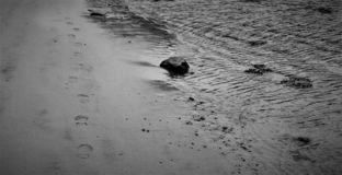 Svartvita fotsteg på stranden arkivfoto