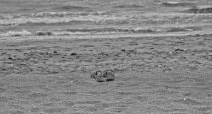 Svartvita glömda sandaler Arkivfoton