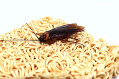 Svartvita kackerlackor royaltyfria foton