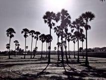 Svartvita palmträd Kontur och skugga Royaltyfri Fotografi