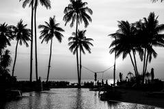 Svartvita palmträdkonturer på den tropiska stranden Natur fotografering för bildbyråer