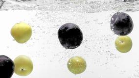 Svartvita plommoner i vatten stock video
